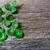 feliz · dia · de · São · Patricio · shamrock · folhas · verde · cor - foto stock © tasipas