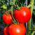 friss · retek · föld · zöldség · kert · zöld - stock fotó © tasipas