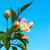 beyaz · çiçekler · kiraz · bahar · bahçe · mavi · gökyüzü · gökyüzü - stok fotoğraf © tasipas