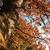осень · дерево · видимый · текстуры · Кора - Сток-фото © tatiana3337