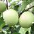 яблоки · филиала · дождь · капли · продовольствие · яблоко - Сток-фото © tatiana3337