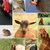 collage with different farm animals stock photo © taviphoto