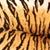 colorido · pormenor · tigre · textura · natureza · cor - foto stock © taviphoto