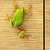 cute green frog on furniture stock photo © taviphoto