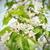 japán · közelkép · növekvő · virág · tájkép · kert - stock fotó © taviphoto