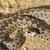 legelő · férfi · veszélyeztetett · kígyó · Európa · természet - stock fotó © taviphoto