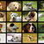 retrato · romeno · pastor · cão · verde · fora - foto stock © taviphoto
