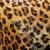 detail of leopard fur stock photo © taviphoto