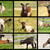 collection of images with goats stock photo © taviphoto
