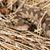 álca · orr · természetes · élőhely · levelek · veszélyes - stock fotó © taviphoto