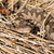 toxique · naturelles · habitat · pierre · animaux · danger - photo stock © taviphoto