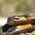 kígyó · mérges · zöld · nyitott · szájjal · száj · Afrika - stock fotó © taviphoto