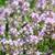 bocado · roxo · pormenor · verde · flor - foto stock © taviphoto