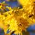bokor · díszítő · kert · közelkép · virág · tavasz - stock fotó © taviphoto