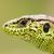 masculino · areia · lagarto · em · pé · madeira - foto stock © taviphoto