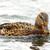 úszik · víz · család · madár · tó · kacsa - stock fotó © taviphoto