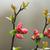 日本語 · 赤 · 花 · 花 · 自然 · 庭園 - ストックフォト © taviphoto
