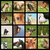 birka · űr · szöveg · állat · magányos · mezőgazdaság - stock fotó © taviphoto