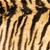 echt · tijger · bont · textuur · gestreept · patroon - stockfoto © taviphoto