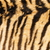 mooie · tijger · bont · dier - stockfoto © taviphoto