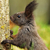 portrait of wild european squirrel stock photo © taviphoto