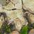 suprafata · fisuri · multe · copac · roşu - imagine de stoc © taviphoto