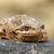 kurbağa · bahçe · gölet - stok fotoğraf © taviphoto