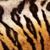 detay · kaplan · kürk · gerçek - stok fotoğraf © taviphoto