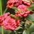 belo · jardim · flor - foto stock © taviphoto