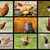 farm birds collection stock photo © taviphoto
