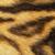 detailed tiger fur stock photo © taviphoto