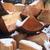 yakacak · odun · kıyılmış · kereste · ahşap - stok fotoğraf © teamc