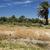 oase · woestijn · Tunesië · zomer · afrika · tropische - stockfoto © tepic