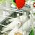 branco · pomba · gaiola · sessão · topo - foto stock © tepic