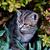 любопытный · области · серый · волка · животного - Сток-фото © tepic