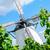 windmill behind grape vine stock photo © tepic