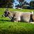 koe · weide · Oostenrijk · zomer · veld - stockfoto © tepic