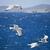 voador · gaivotas · oceano · céu · nuvens · pássaro - foto stock © tepic