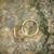 arany · jegygyűrűk · száraz · levelek · levél · pár - stock fotó © tepic