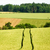 tractor track in a corn field stock photo © tepic