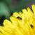 黒 · カブトムシ · 春の花 · 昆虫 · 黄色の花 - ストックフォト © thomaseder