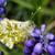 groene · insect · macro · shot · vergadering · witte - stockfoto © thomaseder