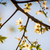 cherry blossoms stock photo © thp