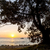 закат · Австралия · лет · устрица - Сток-фото © thp