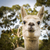 alpaca stock photo © thp