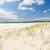 plaj · çim · parlak · mavi · gökyüzü · yeşil · ot - stok fotoğraf © THP
