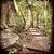 sűrű · bambusz · erdő · Kiotó · Japán · fa - stock fotó © thp