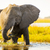 elephant with water spray stock photo © thp
