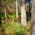 adelaide · colinas · flores · Australia · cielo · árbol - foto stock © thp