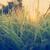 campo · erba · perfetto · tramonto · primavera · legno - foto d'archivio © thp